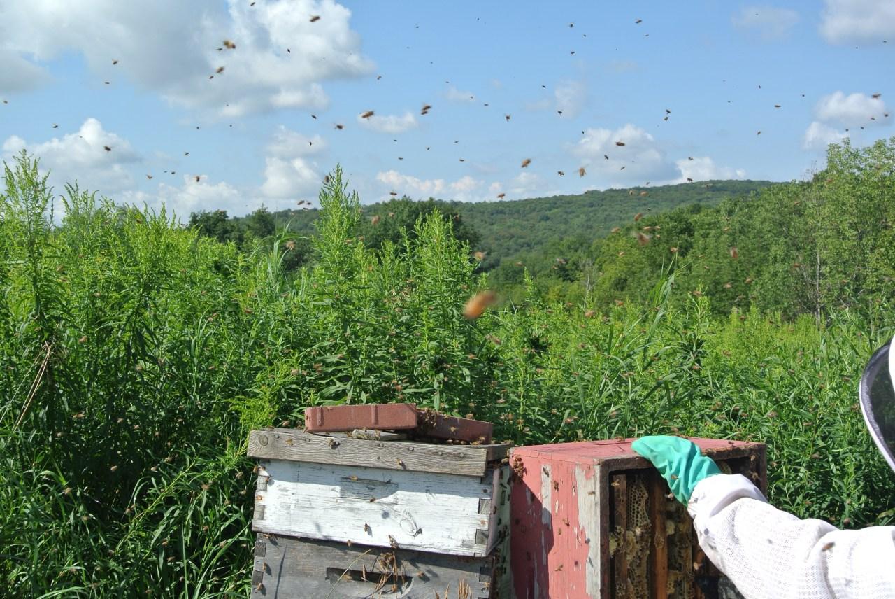 Healthyish Fermented Honey Really Raw Honey